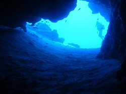 ANDP Diver